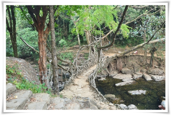 Living Root Bridge - Nowhet
