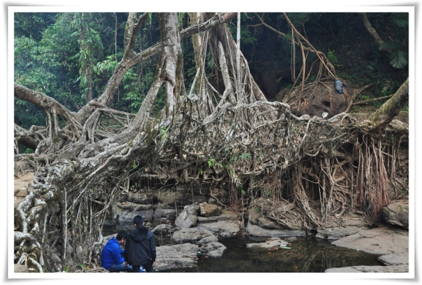 Living Root Bridge - NowhetI