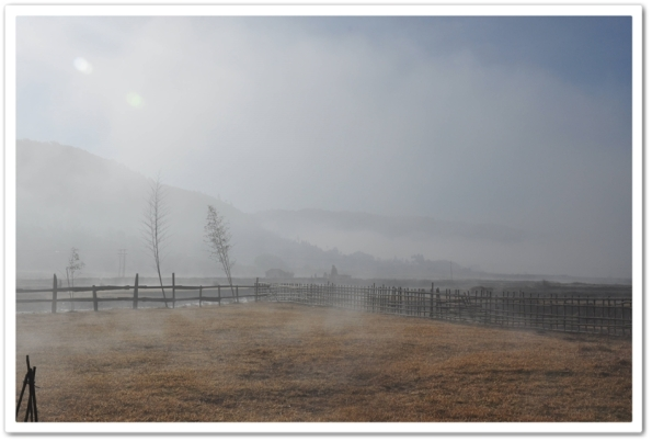 Morning Mist at MaplePine Farm